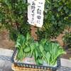菜の花の葉
