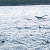 奄美大島でクジラと泳ぐ!【前編】