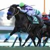 【京成杯 2018】予想オッズと出走予定馬とデータ分析といろいろ考察する。