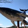 シーシェパード支援している?LUSHもPatagoniaも嫌いな僕がイルカを食べに太地町までいった話。