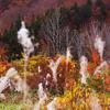 静かな静かな山の秋