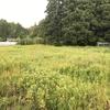 【その②】カインズの除草剤(グリホサート41%)の効果は?荒地の雑草を始末する!