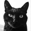 黒猫陛下の書斎