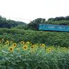 JR和歌山線とひまわり