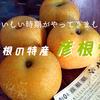 【まちの話題】朝から大行列!ひこねの特産『彦根梨』が今年も大人気です!!