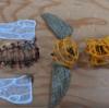 3Dペンでクワガタを作る方法【後半戦】