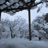 ◆12/7      一日中 雪が降り続いた翌日