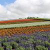 北海道旅日記3-2 美瑛 雄大な丘とお花畑スポット 四季彩の丘