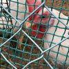 鶏と卵と鳥と。