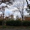 今日のお散歩風景 公園でハトにたかられ・・・