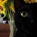 黒猫のあしあと帖