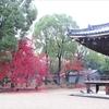 仁和寺の紅葉②観光28R...過去②観光20161127京都