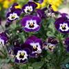 7人の小人たち? 花の顔。木になるたわし。・・・あなたは何に見えますか?