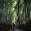 そうだ 京都、行こう。GW2015~嵯峨野の竹林・トロッコ列車編~