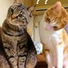 飼っている猫の気持ちが分からない。何故?を調べてみた。猫ってやっぱり気まぐれ?