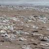 ゴミを使って緑化は可能なのか?…