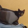やはり黒猫はピント合わせが難しい