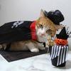 昨年のハロウィンは猫さんコスプレで記念撮影!