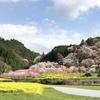 春の桃源郷♡西川花公園の春の花@高知 香南市香我美町