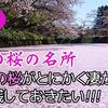 花筏でチョ~有名!日本一の桜の名所・弘前公園の桜がとにかく凄かったのでブログに残しておきたい!!!
