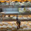 スーパーで100円くらいで売ってる「カット野菜」のありがたさ