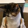 【愛猫日記】毎日アンヌさん#61