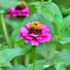 季節の花(令和三年七月2)