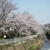 桜並木 その2