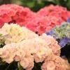 花の写真でも見て癒されちゃってくださいシリーズ♪②