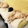 猫犬話:軽度の動物アレルギーと付き合いながら犬猫と一緒に暮らす方法