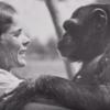 【心暖まる話】20年ぶりの再開、チンパンジーとの間に愛情が芽生えた実話