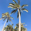 ハワイのホテルは、THE KAHALA HOTEL & RESORT(ザ カハラ ホテル & リゾート)で決まり