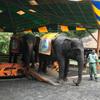 タマンサファリ・インドネシア~園内と動物ショーなど