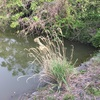 『宮下池』静岡県掛川野池群バス釣り完全攻略マップ
