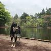 雲場池をお散歩