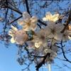 春といえば!!