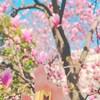 【京都 ホテル情報】おすすめラグジュアリーホテル4選