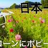 4Kドローン空撮『日本一ポピー畑』DJI Goggles Japan