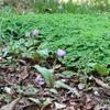 神代植物公園の桜、桜、桜。と、春の花。