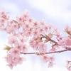 今ならわかる 桜の季節に思い出すこと