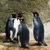 ペンギンアップデートに沿ったSEO対策とは?