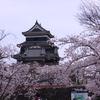 満開のさくら松本城を散策する