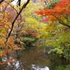 小ネタ集:【湯布院の名所】金鱗湖周辺で楽しむ紅葉と野鳥たち:金鱗湖(大分県由布市)