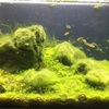 腐海45センチ水槽④ とアピストと60水槽