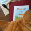 【絵本】『ダイちゃんの猫ねこ日記』のこと