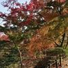 京都の紅葉~京都府立植物園~