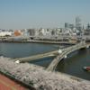 【橋】台東区今戸1丁目:隅田川の桜橋