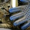 うちの猫のブラッシングはこれ!手袋型ラバーブラシ