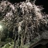妙見坂下の枝垂れ桜 2020 Night & Day!