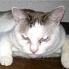 不織布と猫